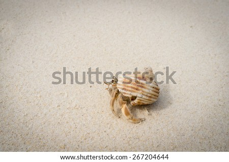 Tiny hermit crab on the tropical island. - stock photo