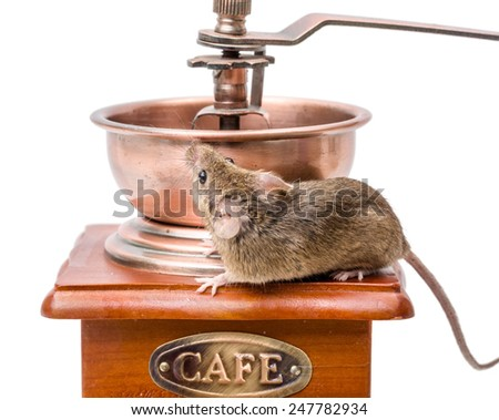 Tiny house mouse (Mus musculus) on wooden coffee grinder - stock photo