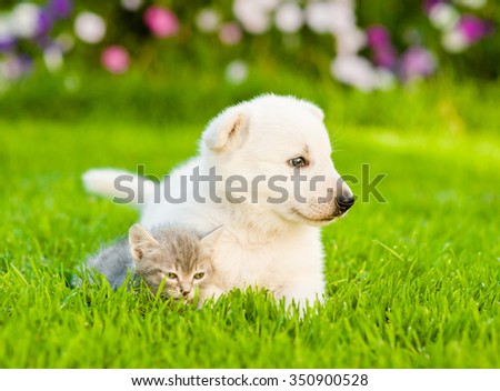 Tiny kitten lying with White Swiss Shepherd`s puppy on green grass