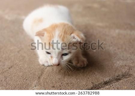 Tiny kitty cat sitting on floor selective focus - stock photo
