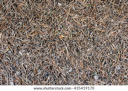 tiny needles on the clay surface - texture or background - stock photo