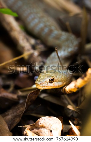 Snake Eating Tail Stock Images Royalty Free Images