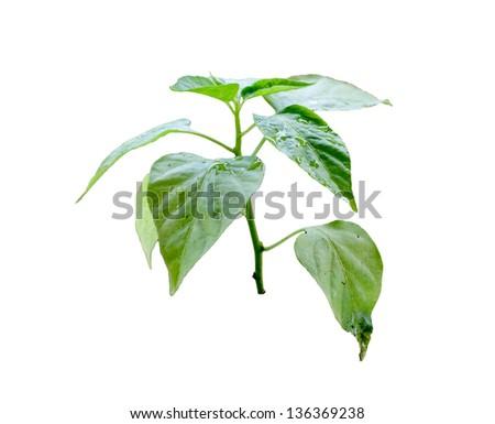 Tiny plant growing isolated on white background - stock photo