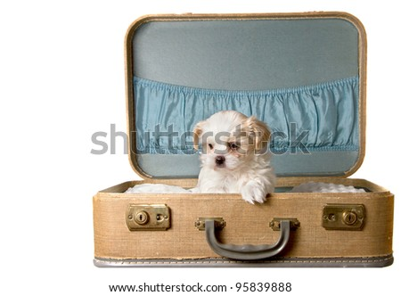 Tiny puppy in a vintage suitcase, isolated on white