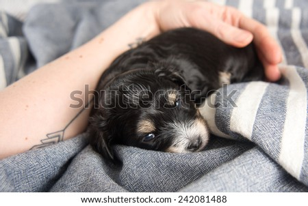 Tiny Puppy Sleeping on Bed - stock photo