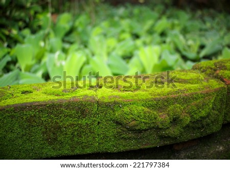 tiny soft  green moss on a brown brick near a garden pond close up under sunlight with blur water fern plants in the background  - stock photo