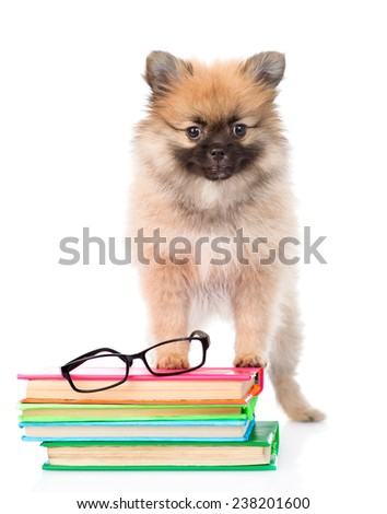 Tiny spitz puppy with glasses and pile books. isolated on white background