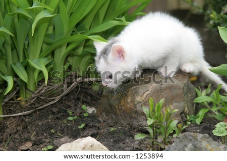 Tiny white kitten looking around the garden