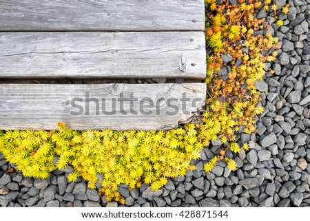 Tiny yellow succulents, gray gravel and rustic wood planks. Background for garden or nature theme invitation or message. Top view. Copy space - stock photo