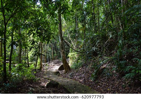Tioman island jungle and tropical rainforest near waterfalls. Flora and wild nature of Malaysia