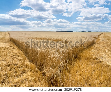 Tip of a partially harvested wheat field in a wide, rural landscape with blue and white sky   - stock photo