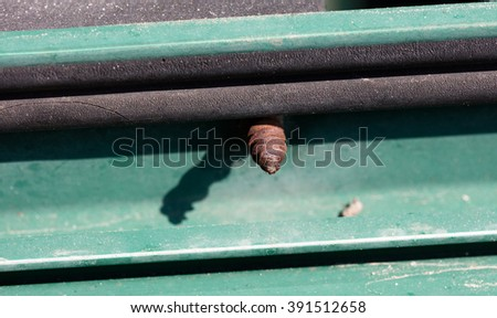 Tip of a rusted screw exiting from  a green window - stock photo