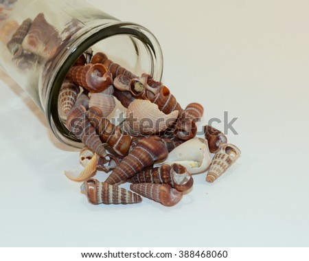 Tipped Over Glass Jar of Spiral Ocean Shells