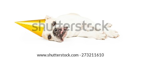 Tired Bulldog breed dog wearing a yellow birthday party hat laying on his side with tongue out. Image is sized to fit a popular social media timeline cover image placeholder. - stock photo