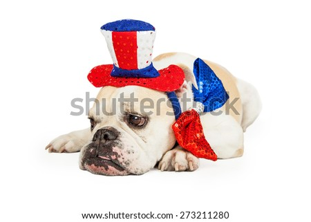 Tired bulldog wearing American Fourth of July party hat and tie laying down - stock photo