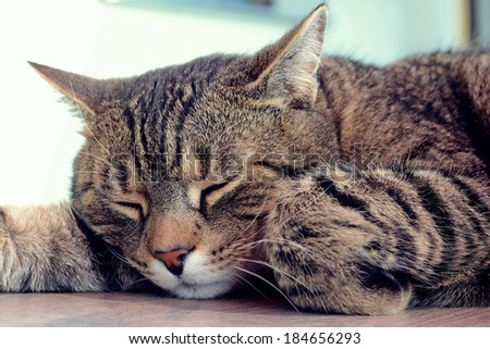 Tired cat is sleeping