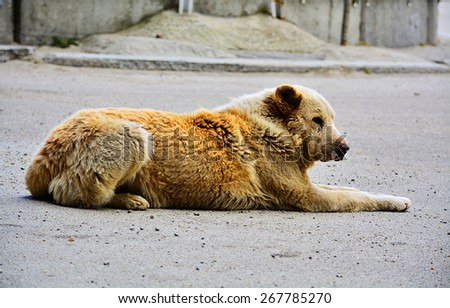 tired dog - stock photo