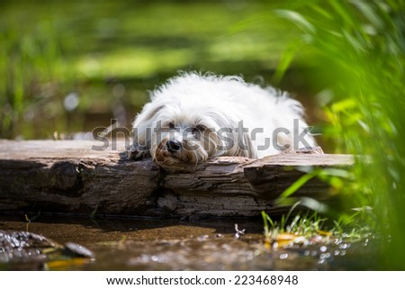 Tired dog on a trunk in water