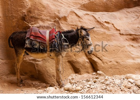 Tired donkey standing next to a stone wall