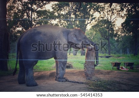 tired elephant