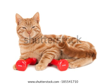 Tired ginger cat with red dumbbells, isolated on white  - stock photo