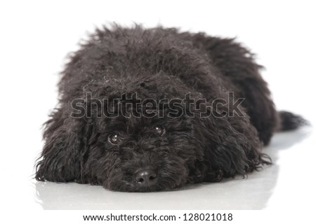 Tired puppy - stock photo