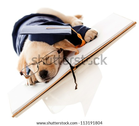 Tired puppy graduating from school wearing a mortar board - stock photo