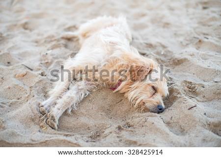 Tired stray dog sleeping on the sand. - stock photo