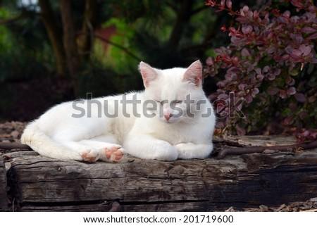 Tired white cat sleeping on the garden - stock photo