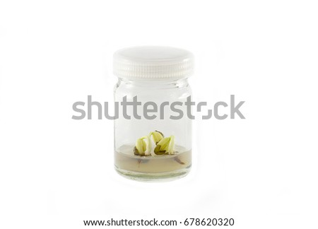tissue culture bottle with small plant with white background