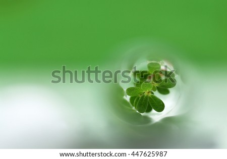 Tissue cultured plant in test tube
