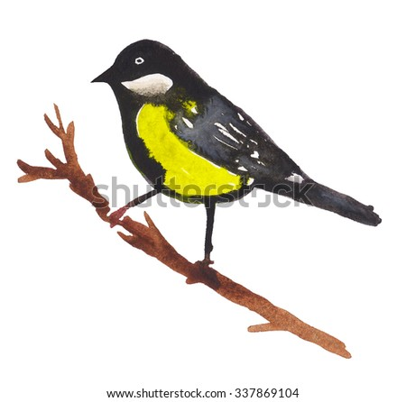Tit bird on tree ranch. Watercolor hand painted Illustration on white background.