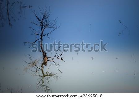 Title: Dead trees in the swamp. Description: Dead trees in the swamp with blue sky background. - stock photo