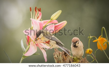 titmouse  standing on a lily while a sparrow is looking down