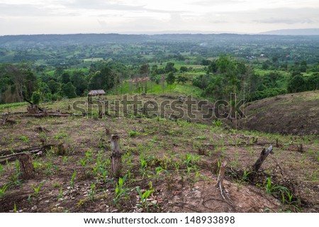 To clear the forest for agriculture