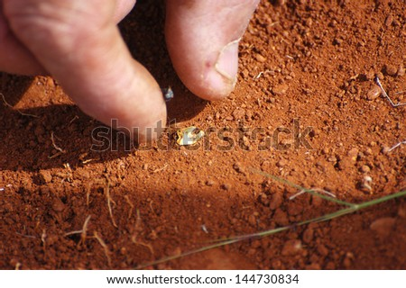 To find a gold nugget - stock photo