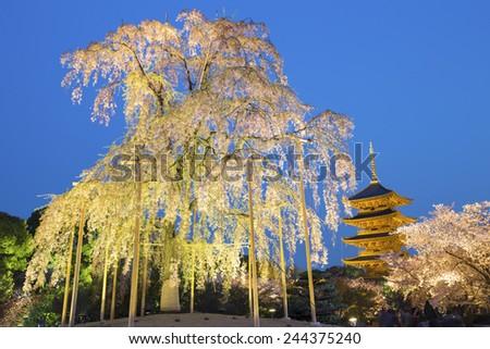 To-ji pagoda in the springtime with cherry blossom tree illuminated at night, Kyoto - Japan  - stock photo