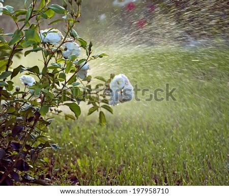 to water a garden - stock photo