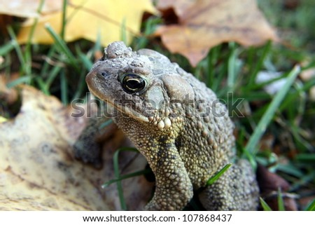 toad close up