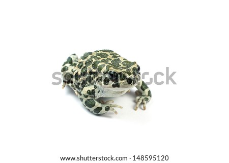toad earthy on a white background