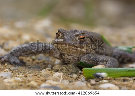toad in nature macro - stock photo