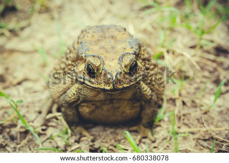 Toad on the ground.