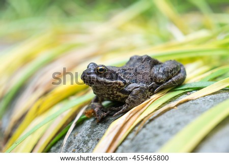 Toad sits on green leaves - stock photo