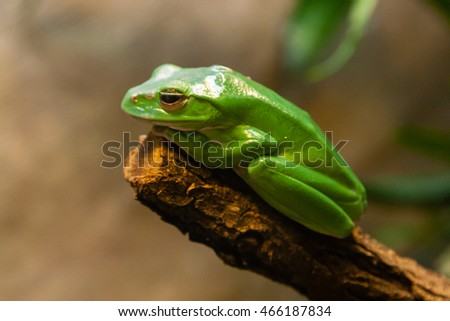 toad sitting on a branch