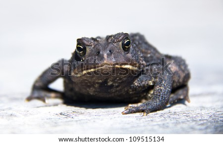 Toad with huge eyes and big mouth staring directly at camera on white background