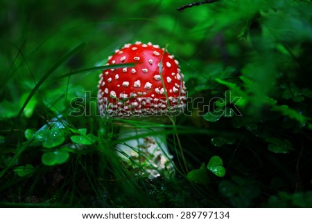 Toadstool in the dark forest with blurry background. - stock photo