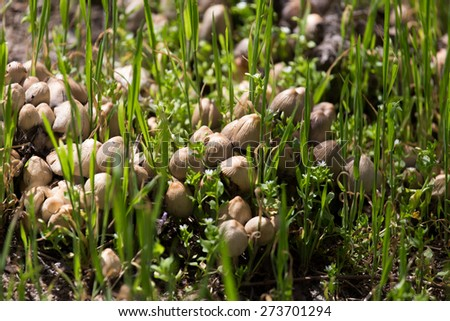 toadstool mushrooms nature spring - stock photo