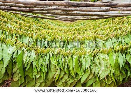 Tobacco drying - stock photo