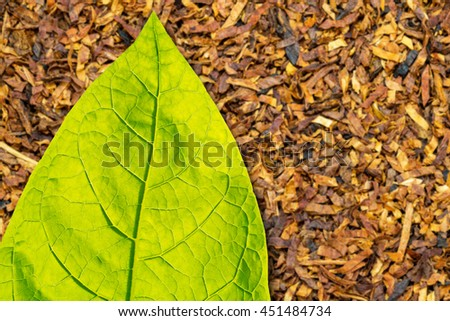 Tobacco  green leaf  on dry cut brown tobacco leaf  background, close up, text place