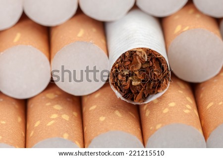 Tobacco in cigarettes with a brown filter close up - stock photo